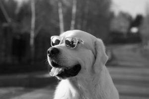 子供のメガネ、どこで買う?